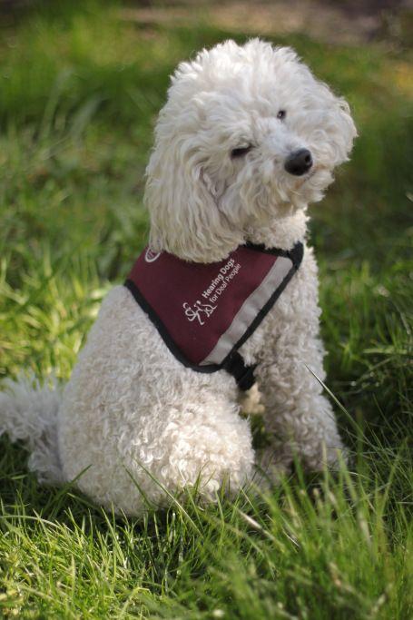 training Hearing Dogs