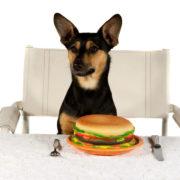 assistance dogs gourmet burger kitchen